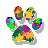 Paw prints colorful