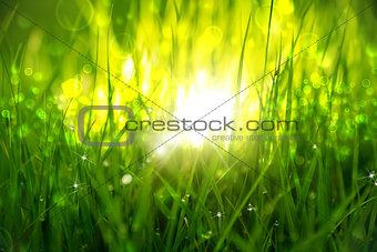 Green grass at sunrise.