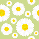 Chamomile flowers seamless