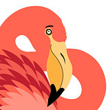 Portrait of red flamingo