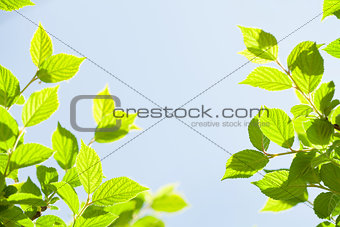 Abstract sunny summer background
