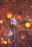 Colorful Christmas Sparkler