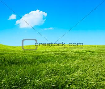Green grass fields