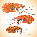 Three prepared shrimps on colorful background.