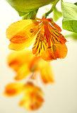 Fresh yellow lily
