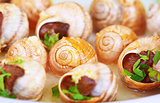 Tasty escargot background