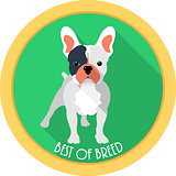 dog best of breed medal icon flat design