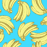 Sketch tasty bananas in vintage style