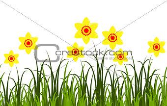 daffodils border