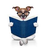dog reading  a book