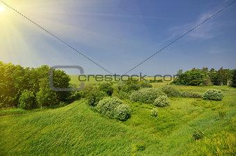 Green Grass Field Landscape
