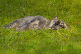 Dog laying in field