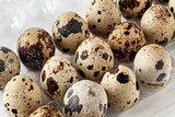 Quail Eggs On Tray