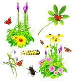 Set of summer flowers and insects