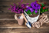 Spring flowers in wicker basket with garden tools