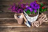 Spring flowers in wicker basket with garden tools