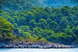 dense coniferous forest on a rocky seashore
