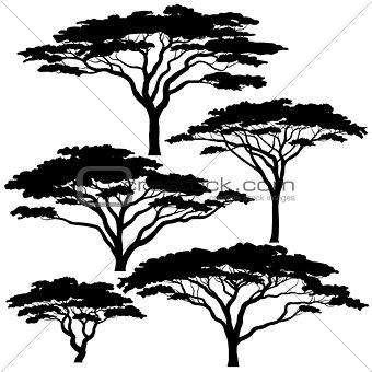 Acacia tree silhouettes