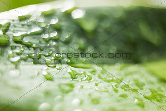 A close up of a leaf