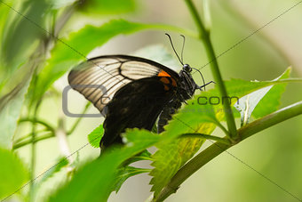 A close up of a leaf with butterfly