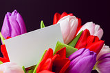 Bunch of tulips and white card