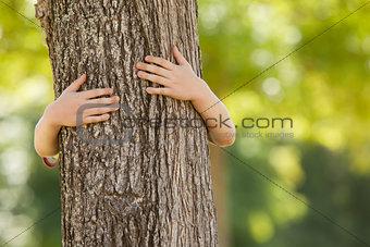 Little boy in the park hugging tree