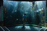 Man looking at fish tank