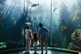Family looking at fish tank