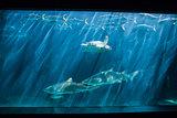 Turtle swimming in fish tank