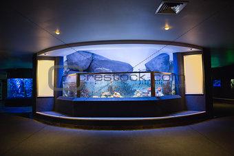 Lit up fish tank