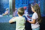 Cute siblings looking at fish tank