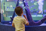 Cute boy looking at fish tank