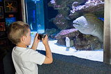 Little boy looking at fish tank