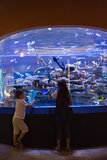 Little siblings looking at fish tank