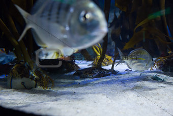Fish swimming in a tank