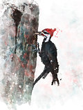 Pileated Woodpecker Watercolor