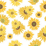 Sunflower vector seamless pattern on the white background