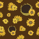 Sunflower vector seamless pattern on the dark background