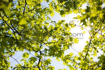 sky and foliage