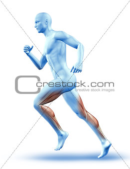 3D male figure running with muscles