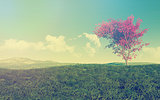 Maple tree landscape with vintage effect