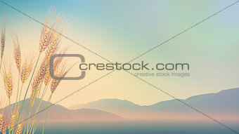 3D wheat with hills in distance with retro effect