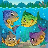Four piranha fishes underwater