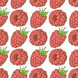 Sketch tasty raspberry in vintage style