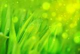 Spring Grass Macro Shot