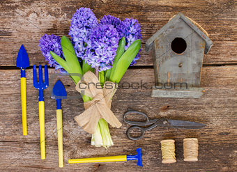 Blue hyacinth and gardening  set up
