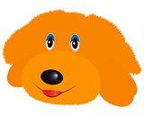 doggy soft toy