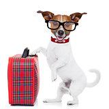 dog with luggage