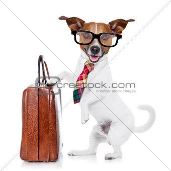 businessman boss dog