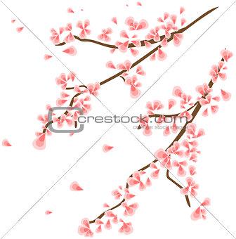 Branch with sakura flowers